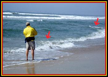 swimbait com - Hammer Hooking: New Ideas for Surfperch